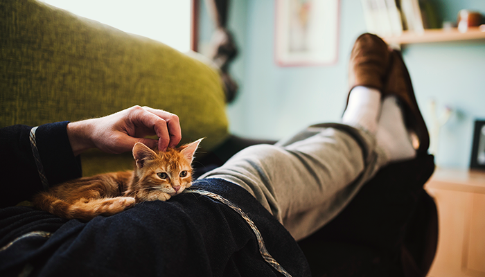 Man relaxing on couch with kitten
